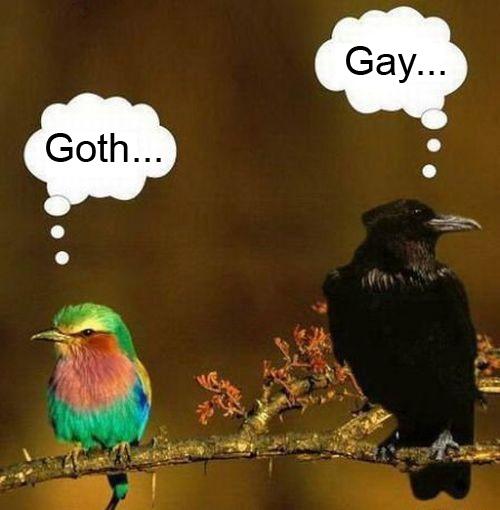 bird rivals