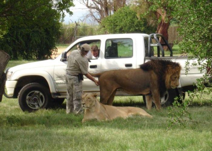 Lion exam