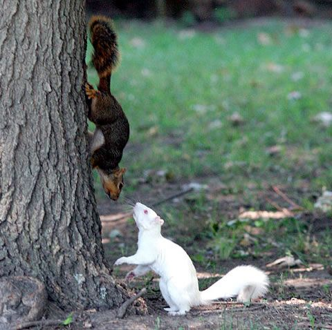 albino_05squirrel