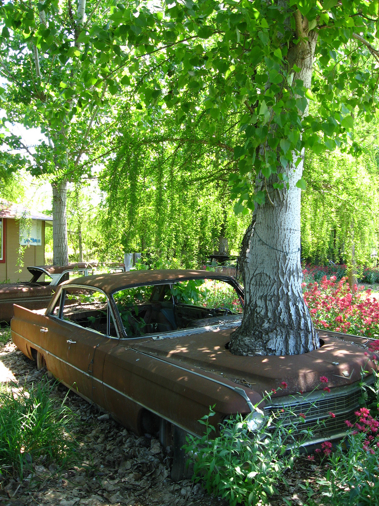 cadillac tree