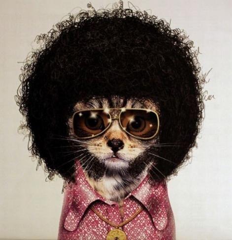 afro cat