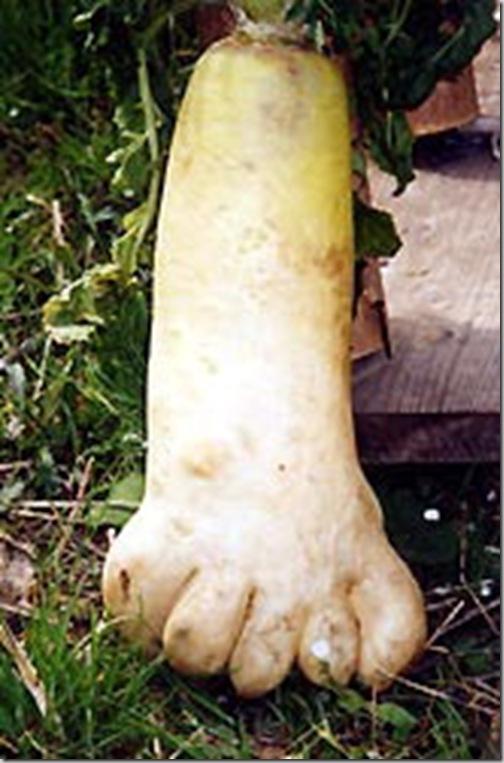 foot_beet