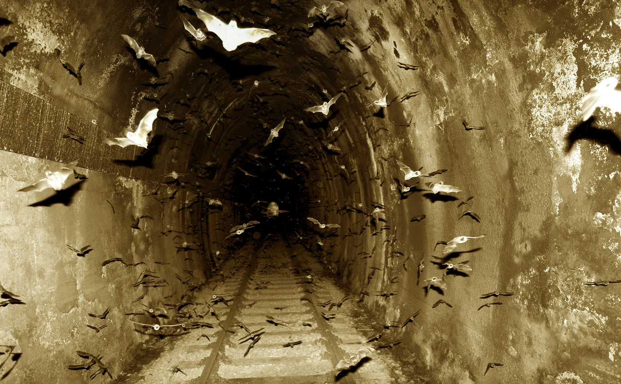 Bats In The Tunnel By