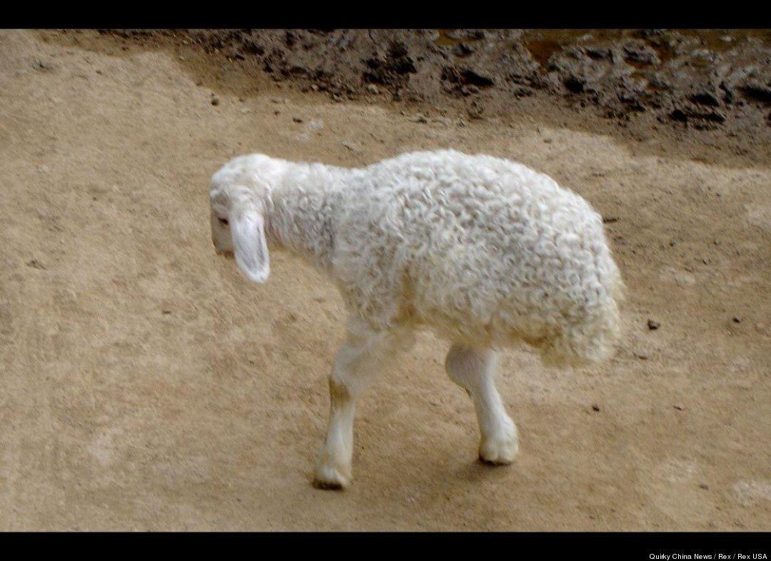 2 leg lamb los cuatro ojos some days you're the dog some days you're the,Two Legged Cat Meme