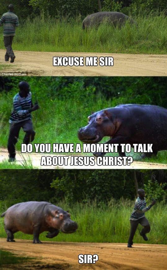 JW Hippo