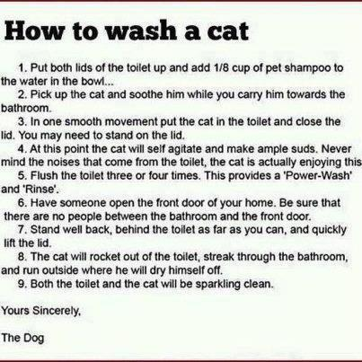 cat bath instructions