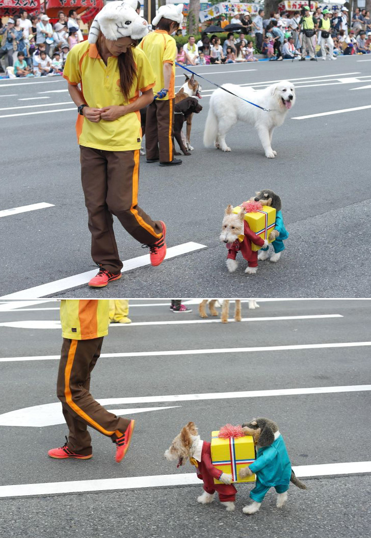 cool dog costume