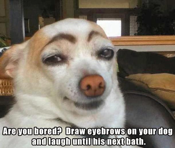 doggie eyebrows