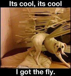 fly got