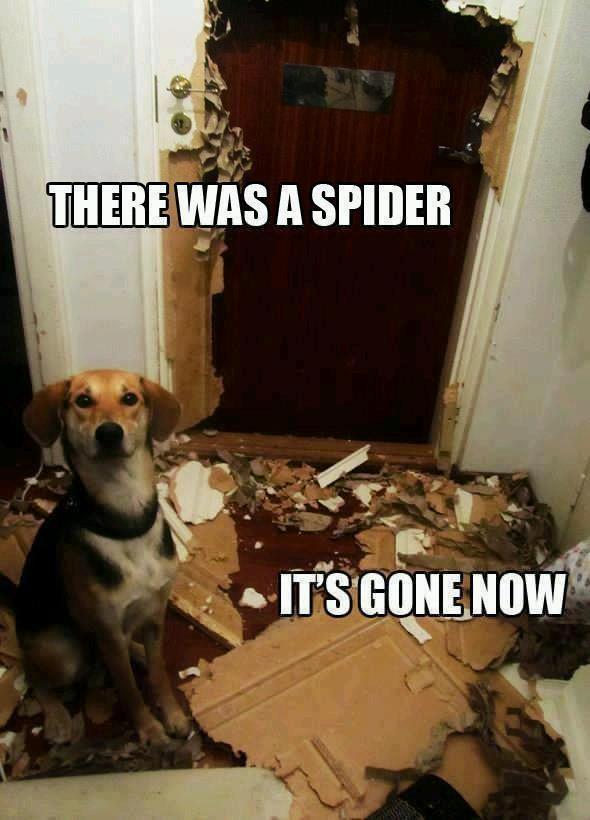 spider gone