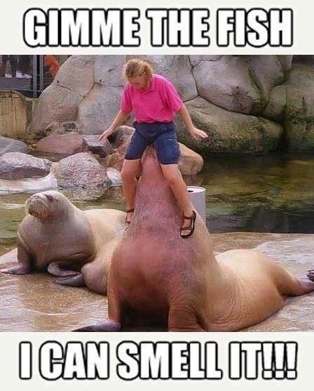 I smell fish