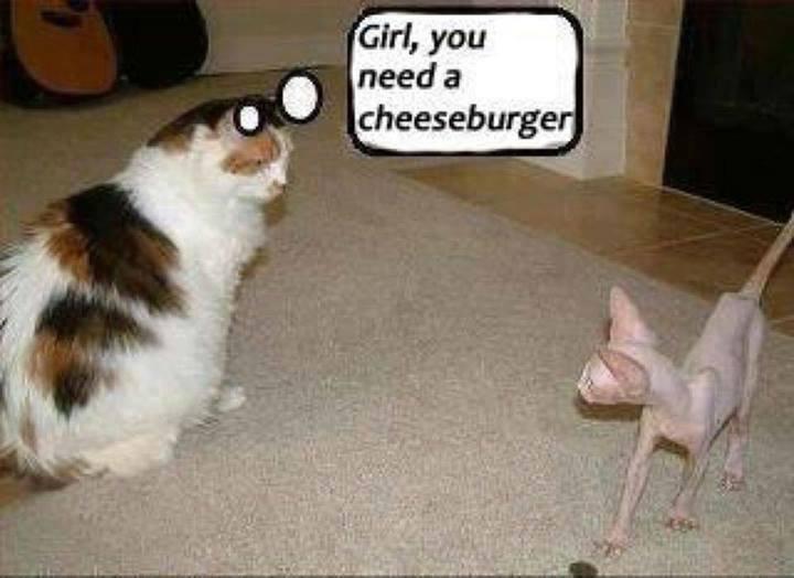 No Haz Ceezburger