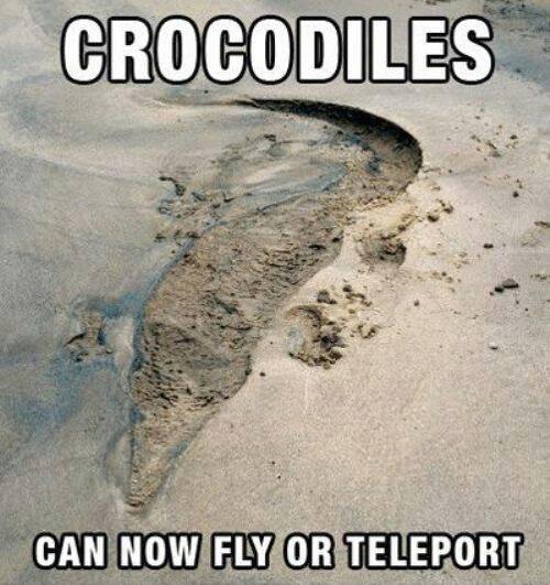 crocs gone