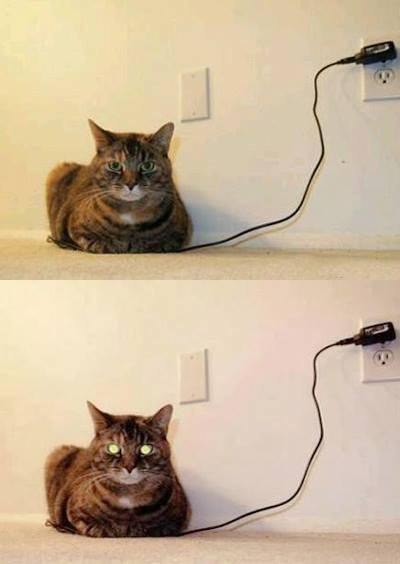 cat charger